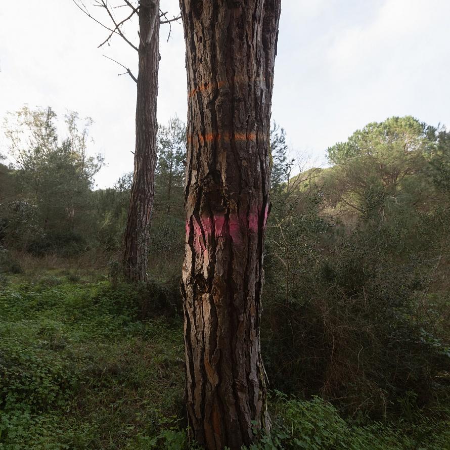Il vuoto degli alberi