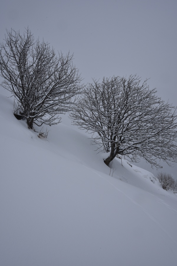 Racconto d'Inverno - A Tale of Winter